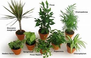 Plante De Salon : les plantes int rieures d polluantes ou les placer clg cr ation ~ Teatrodelosmanantiales.com Idées de Décoration