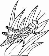Coloring Pages Bugs Bug Printable sketch template
