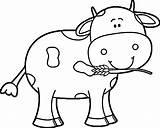 Coloring Cow Printable Adult Worksheets K5worksheets sketch template