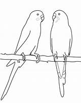 Coloring Parakeet Pages Printable Getcolorings Print Mating sketch template