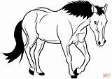 Horse Outline Coloring Wild Mustang Pages Horses Animal Clipart Average Azwer Printable Pixabay Drawing Through Diamond sketch template