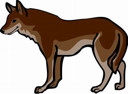 Wolf Clipart Wolves Clip Animated Mexican Wildlife