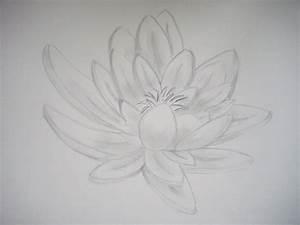 Dessin Fleurs De Lotus : dessin d une fleur de lotus ~ Dode.kayakingforconservation.com Idées de Décoration