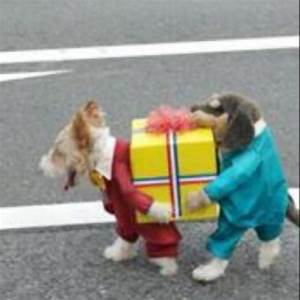 funny dog costume - some people are so clever, but so mean ...
