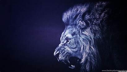 Lion Backgrounds Animal Wallpapers Desktop Background