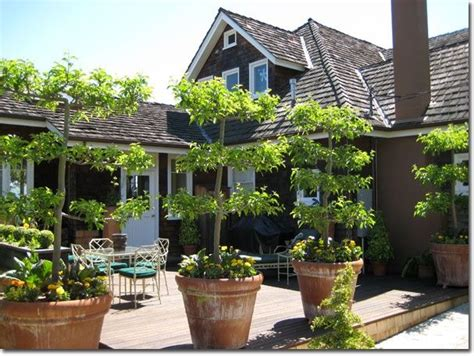 espalier fruit trees in containers pin by megan musgrove building 313 on gardening pinterest