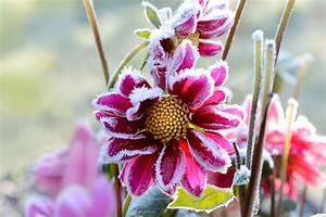 Fleur D Hiver Pour Jardinière : fleurs d hiver ext rieur pivoine etc ~ Dailycaller-alerts.com Idées de Décoration
