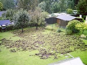 Löcher Im Garten : welches tier bearbeitet so meinen rasen tiere garten spuren ~ Frokenaadalensverden.com Haus und Dekorationen