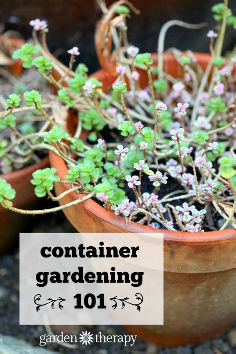 Container Gardening Basics  Garden Therapy