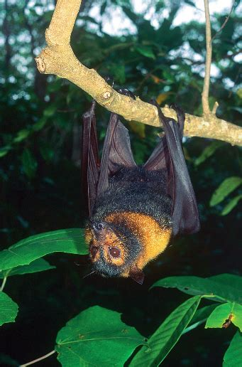 bats wet tropics management authority