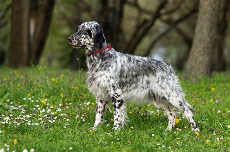 Mouss vous présente avec amour toutes les races de chiens