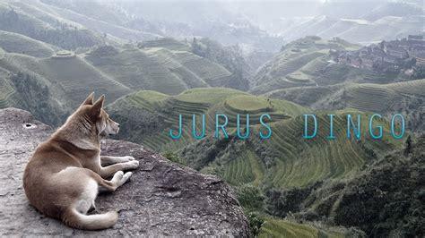Jurus - DINGO - YouTube