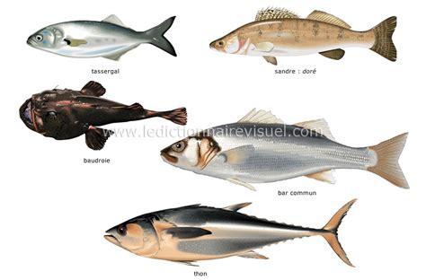 sandre cuisine alimentation et cuisine gt alimentation gt poissons osseux