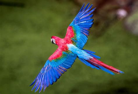 blue birds flying  photography pinterest cas