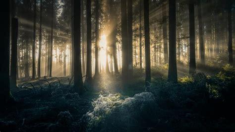 mystische waldbilder fotografieren fototv
