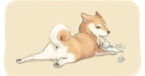 shiba inu drawing   shiba puppy