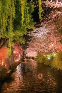 Kyoto Japan Cherry Blossoms at Night