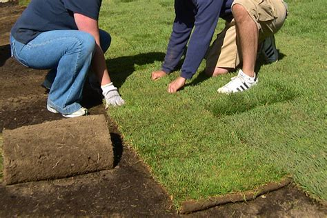 when to put sod services provided by lawnmasters lawn and landscape llc