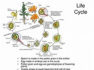 Ppt - Flower Morphology Powerpoint Presentation