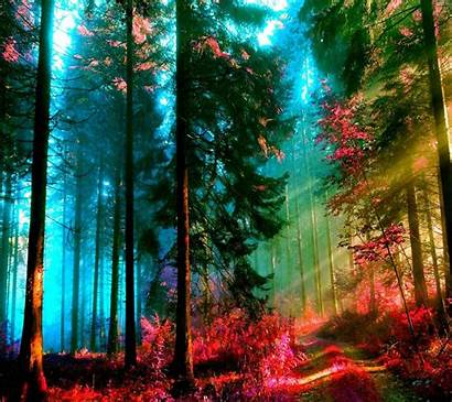 Zedge Nature Colorful F1 Colors Happy Cool