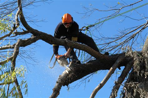 pruning trees tree trimming san fernando valley your way tree service inc
