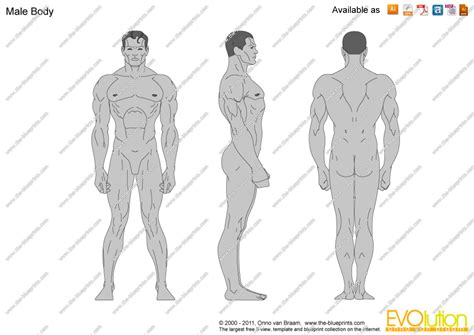blender male template the blueprints vector drawing male body