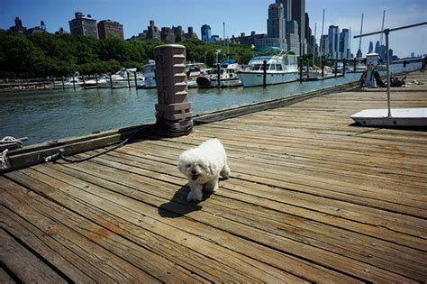 Central Park Boat Dock by Matipoo