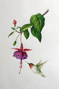 Fuschia Hummingbird Drawing