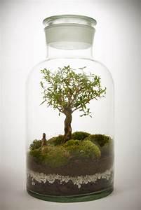 Bonsai Im Glas : les terrariums la tendance design d int rieur cuboak ~ Eleganceandgraceweddings.com Haus und Dekorationen