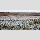 effects-of-floods-on-crops