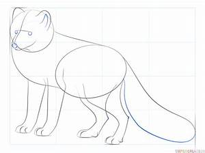 How To Draw An Arctic Fox Step By Step Drawing Tutorials