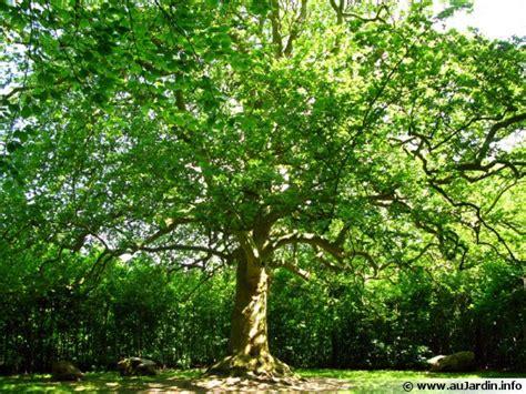 cuisiner rapide les bonnes distances de plantation des arbres et des arbustes