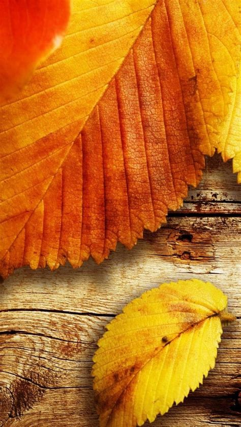 Autumn Wallpapers For Phone Hd by Autumn Hd Wallpapers For Iphone Se Wallpapers Pictures