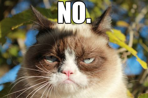 No Meme - grumpy cat saying no funny collection world