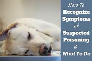 dog chocolate poisoning symptoms