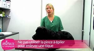 Comment Enlever Un Tique : comment enlever une tique sur un chien youtube ~ Melissatoandfro.com Idées de Décoration