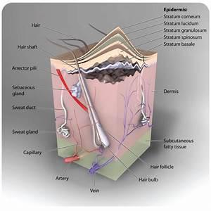 Most Thorough Skin Diagram I U0026 39 Ve Come Accross