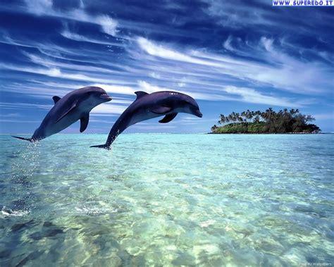 ordinateur bureau hp sfondi delfini 66 sfondi in alta definizione hd
