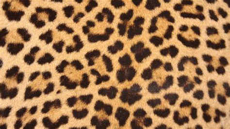 Jaguar Print by Free Images Nature Texture Wildlife Pattern Print