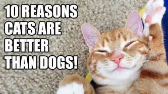 are dogs or cats better 10 reasons why cats are better than dogs