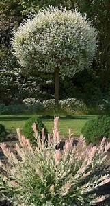 les 19 meilleures images du tableau arbres arbustes With idee de decoration de jardin 13 soja plantation entretien et recolte