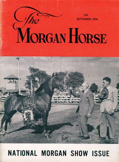 horse magazine morgan horses rebecca