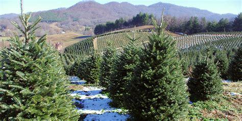 christmas tree farm redland oregon tree farms asheville nc mountains