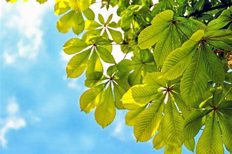kostenlose bild blatt pflanze baum sonne natur