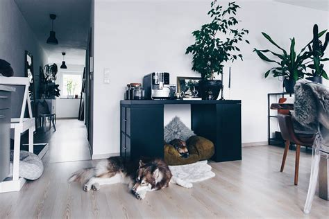 Hundehütte Für Die Wohnung by Diy Hundeh 252 Tte F 252 R Die Wohnung Selber Bauen Inklusive