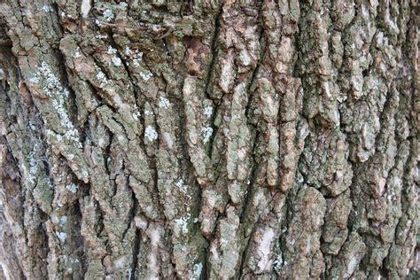 rough tree bark wood  texture www