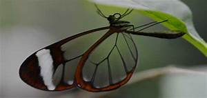 Few of the beautiful and rare butterflies in the world