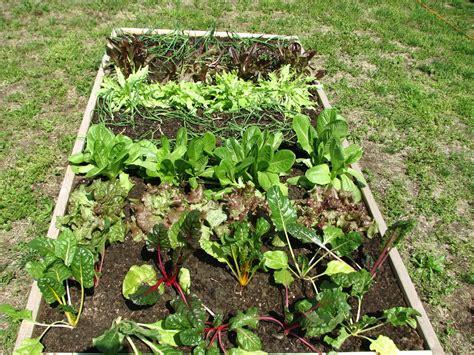 vegetable gardening blogs beginner guide for vegetable gardening nurserylive