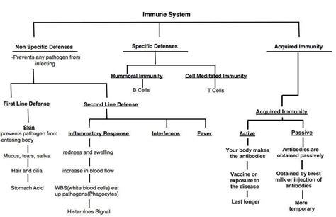 Frog Digestive System Flow Chart Best Of Charmant Anatomy Infographic For My Business Color Combos Free Charts Powerpoint Harvard Review Coffee Shop Milestone Chart Advanced And Templates Resume Cv Template