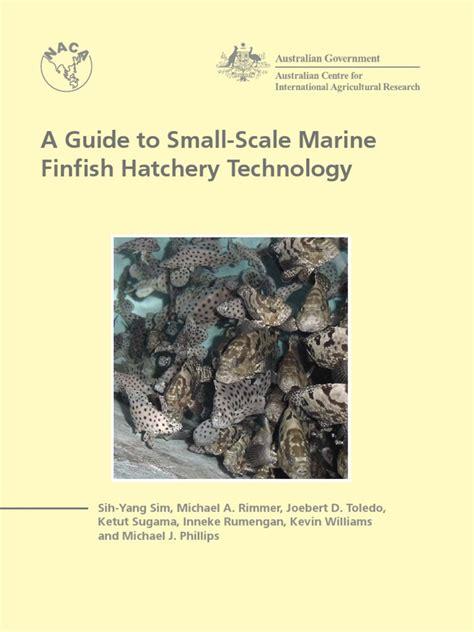 grouper aquaculture